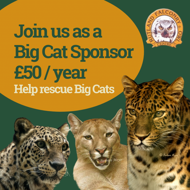 Rescue Centre Big Cats